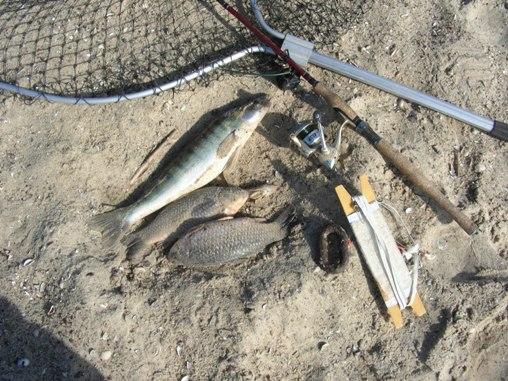 Как судак чуть не испортил рыбалку